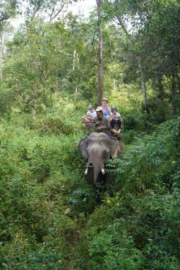 Elephant et Chez Franck 5