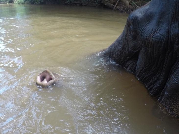 Elephant et Chez Franck 9
