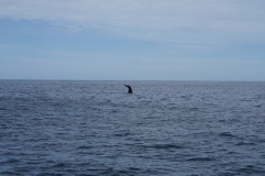 baleine 11