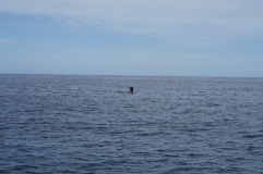 baleine 111