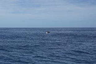 baleine 2