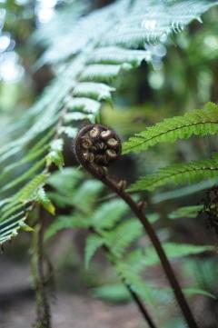 110 - NZ Rotorua