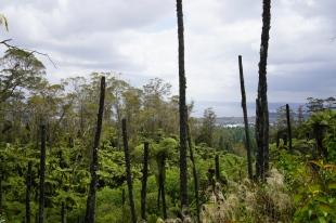 112 - NZ Rotorua