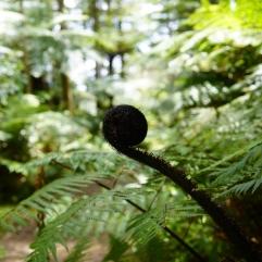 113 - NZ Rotorua
