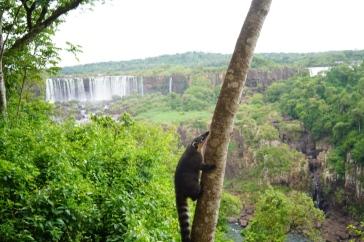 49 Brazil Iguazu