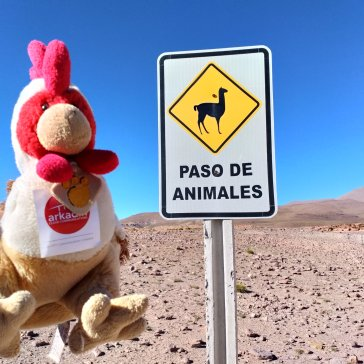 Bolivie - Animaux des Andes