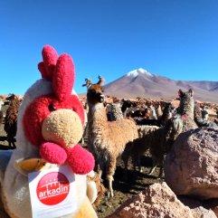 Bolivie - mon ami le lama