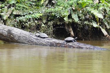 159 Equateur Amazonie