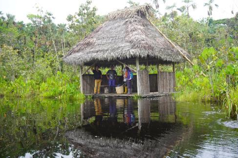 238 Equateur Amazonie