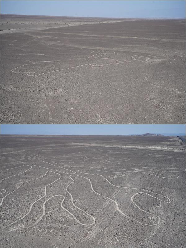 29 Nazca