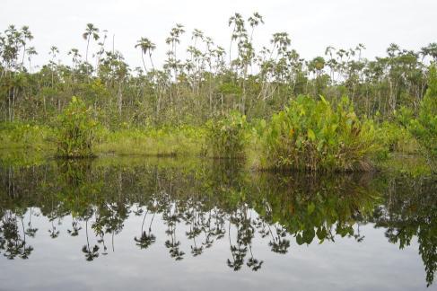 68 Equateur Amazonie