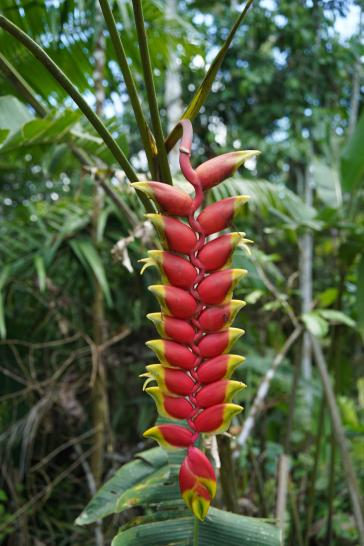 76 Equateur Amazonie