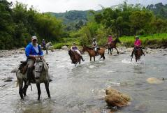 54 Colombie Salento Cheval