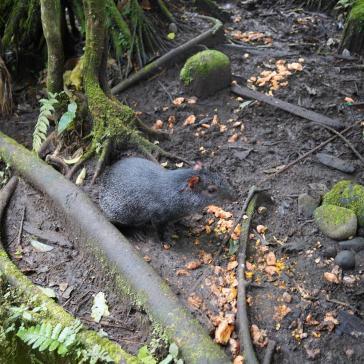55 Equateur Reserve Animalière