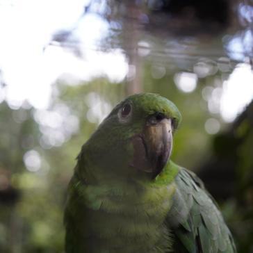 58 Equateur Reserve Animalière