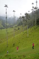 76 Colombie Salento Cocora